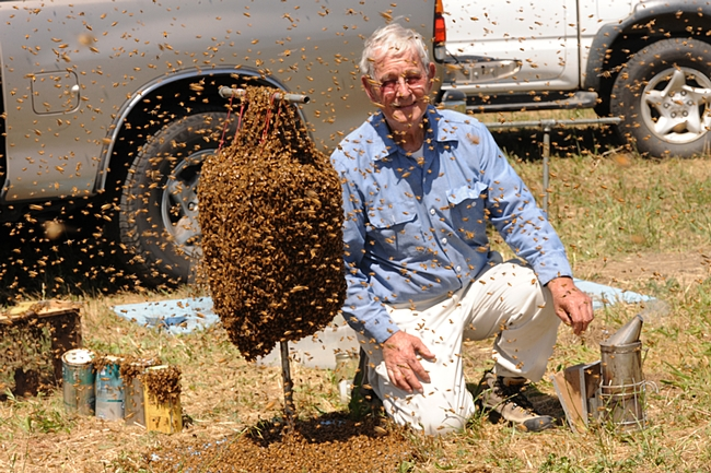 Norm Gary kneels beside a cluster of bees.