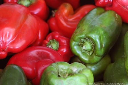 New cost studies are available for fresh and processing bell peppers in Ventura County.
