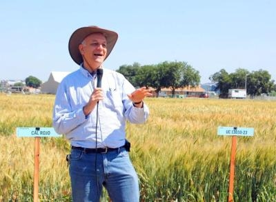 Jorge Dubcovsky speaks at the small grains field day.
