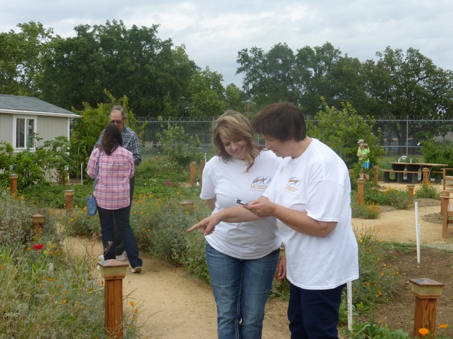 Spring Severson and Lynn Strom, 4-H staff members in Tehama County count pollinators.