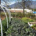 Muir Ranch, a farm at Muir High School in Pasadena, is tended by students and UC Master Gardeners.