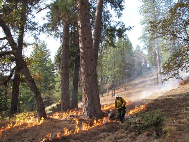 Firefighters set a controlled burn near Hayfork at the 2013 training. Photo by Lenya Quinn-Davidson