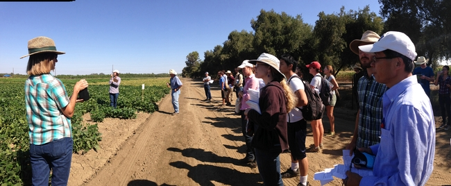 Rachael Long, left, discusses lygus and nematode resistance in lima bean varieties at a 2014 field day.
