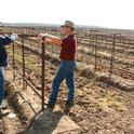 UC ANR Cooperative Extension farm advisor Paul Verdegaal (right) discussing trellising systems with Lodi winegrape grower Joseph Spano.