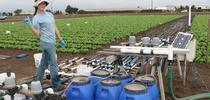 """Laura Murphy, UC Cooperative Extension research assistant in Monterey County, manages the treatment manifold for the """"nitrate in water"""" field trial in head lettuce. for ANR news releases Blog"""