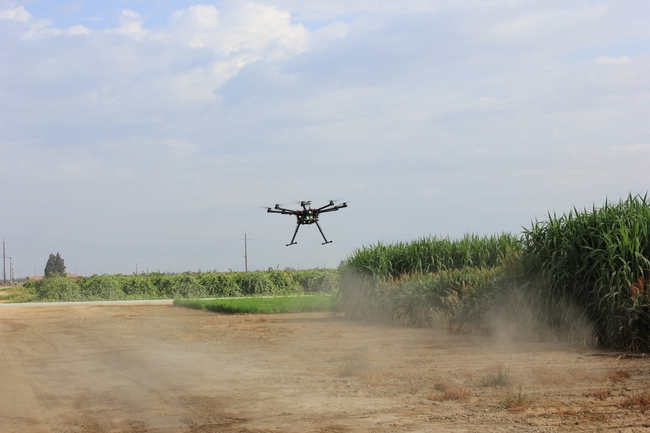 A drone flying over sorghum plots at Kearney collecting phenotyping for character traits, such as plant height, leaf area and biomass. The data will be used to search for genes that control mechanisms involved in drought tolerance and salinity tolerance in sorghum.