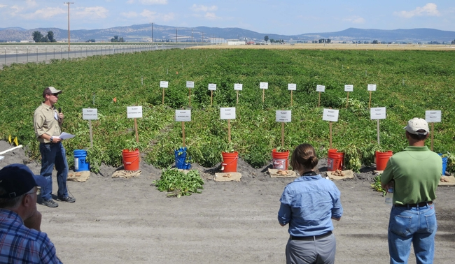 Rob Wilson describes a potato variety trial at Intermountain Research and Extension Center.