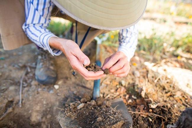 gardener examines soil