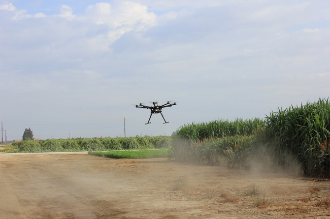 Blue River flies a drone over sorghum research plots at the Kearney REC to collect data on plant height, leaf area and biomass.