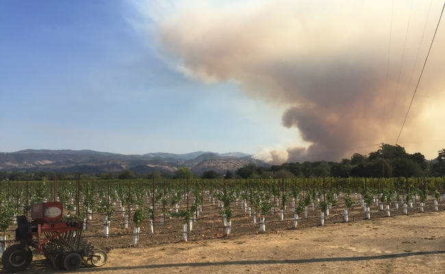 Fire was visible from UC's experimental vineyard in Oakville as the staff prepared to evacuate. Photo by Kaan Kurtural