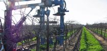 UC Cooperative Extension advisors and specialists to discuss considerations for mechanically pruned grape vineyards. for ANR news releases Blog