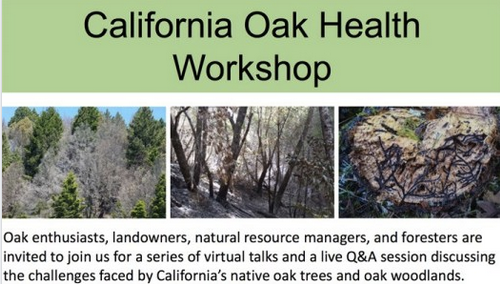 More than 450 people have registered for an online oak health workshop, an event that would normally draw about 40 people in person.