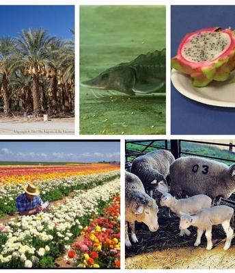 More California farmers eligible for USDA Coronavirus Food Assistance Program funds