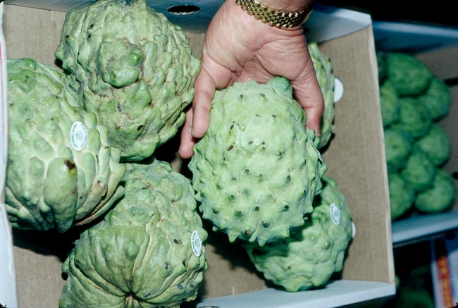 Cherimoya is among the specialty crops now eligible for the USDA Coronavirus Food Assistance Program.