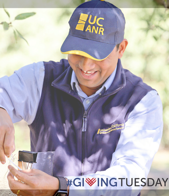UC ANR pushes play for #GivingTuesday