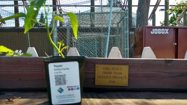 San Mateo Master Gardeners offer innovative methods for educating gardeners
