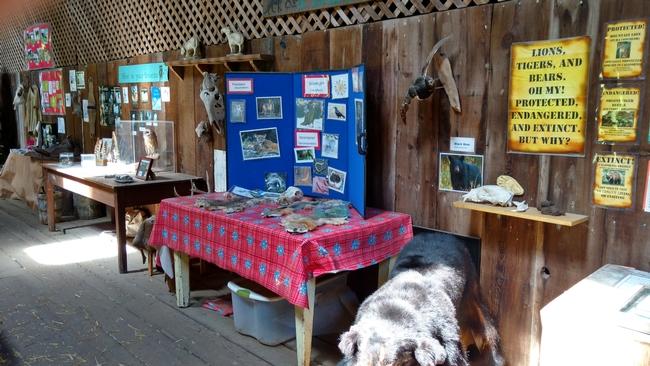 Predator-prey education at Elkus Ranch