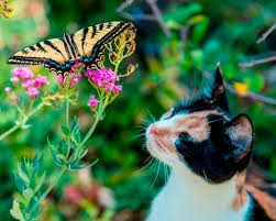 """""""Lily and the Swallowtail,"""" by Tom Furnanz, Calaveras County"""