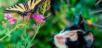 """""""Lily and the Swallowtail,"""" by Tom Furnanz, Calaveras County for ANR Adventures Blog"""