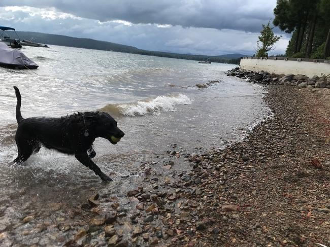 Bella enjoys the beach in northern CA