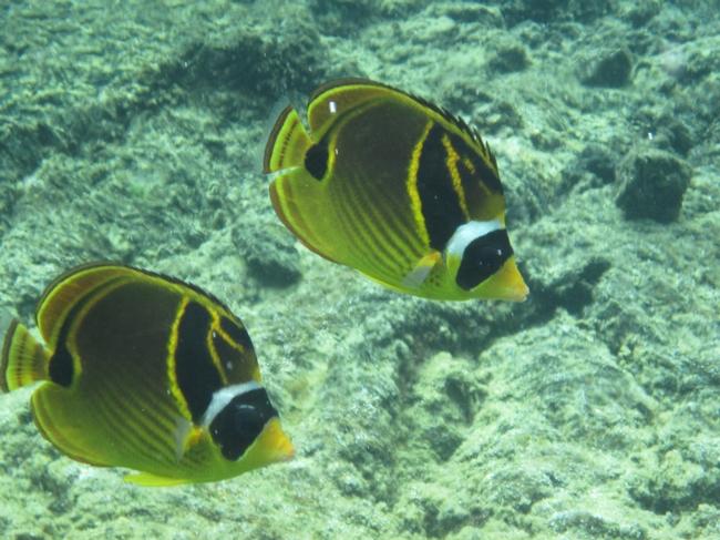 WaiOPae marine reserve, circa 2011