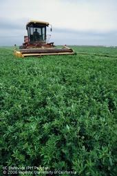 HarvestingAlfalfa-Central Valley of California