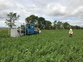 Harvesting alfalfa weevil trials