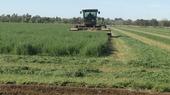 Harvesting organic alfalfa hay in Yolo County.