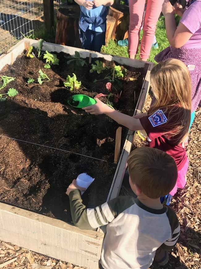Artisan Planting