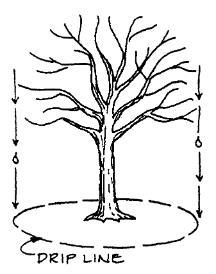 tree drip zone