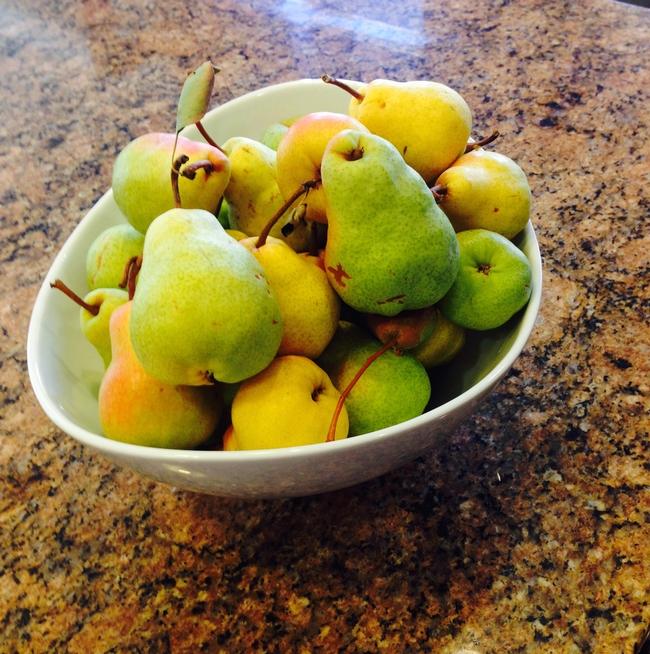 Ripening Bartlett Pears