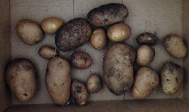 box of picked potatoes