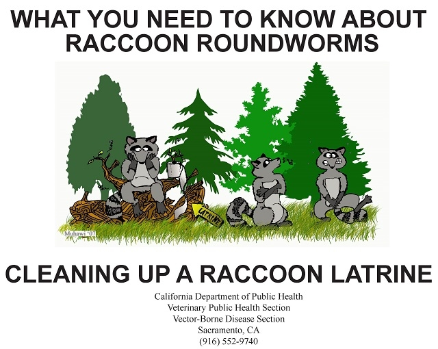 State Racoon Latrine Cleanup