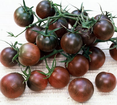 cluster of black cherry tomatoes