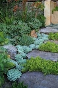 Succulents grouped together along a front door walkway