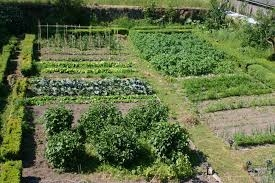 A vegetable garden planted according to watering needs