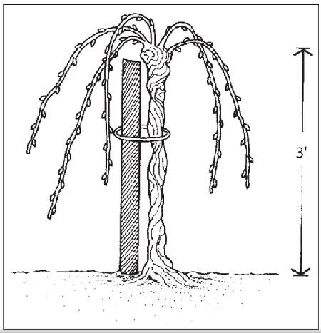 head pruning
