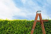 Hedgerow Ladder