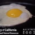 UCANR Backyard Poultry Egg Study