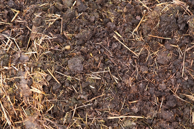 Manure as organic fertiliser