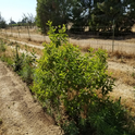 One of the hedgerows on the farm, next to the vegetables. Photo by Shulamit Shroder.