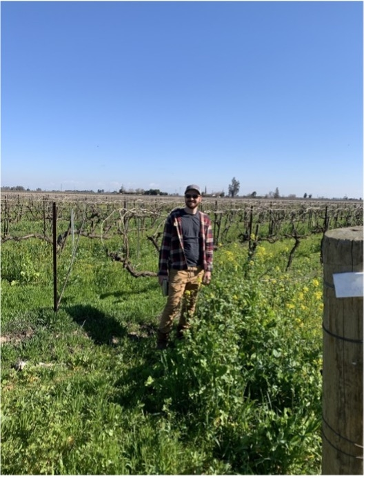 Steven Cardoza with Cover Crops in his Vineyard. Photo by Samikshya Budhathoki.