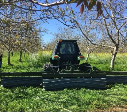 Roller crimper, that Daniel designed, used in his walnut orchard to terminate the cover crops
