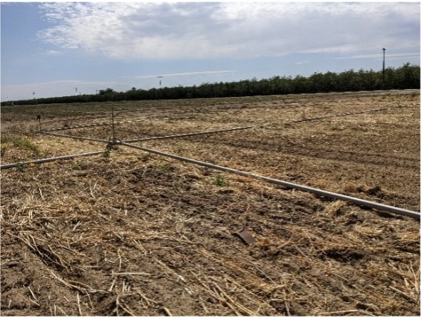 To encourage further decomposition, the cover crops were disked multiple times and irrigated once in March and April.