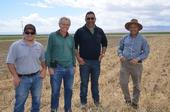Spanish tomato researchers tour NRI Project field in Five Points