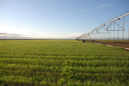 Overhead irrigation can be used in conjunction with conservation tillage.