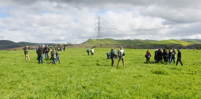 Paicines Ranch cover crop workshop participants examining soil health in Paicines Ranch pasture