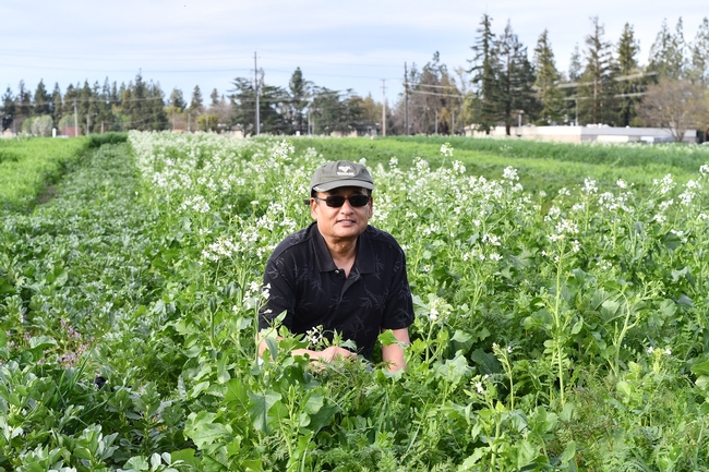 Fresno State Professor and Department Chair, Anil Shrestha, out in his cover crop field on the University's campus farm