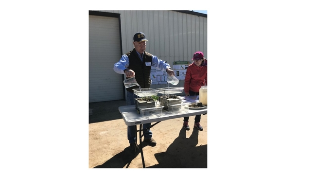 CASI member, Dan Munk, demonstrating water infiltration into long-term cover cropped and reduced disturbance soil compared to no cover crop, routinely disturbed soil at Merced, CA almond orchard public field day, March 21, 2019