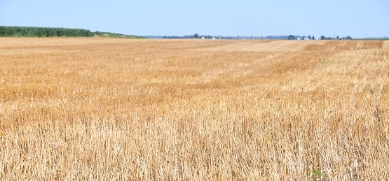 Recently-harvested wheat field with 14-way cover crop no-till planted directly into it at Bottens Family Farm in Sherrard, IL